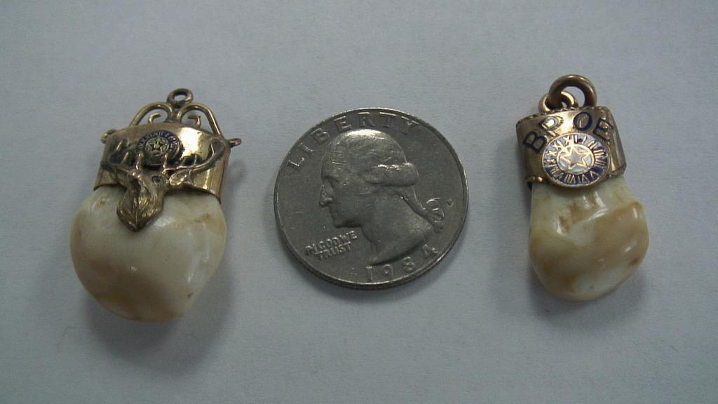 Elk's Lodge Elk Tooth Gold Emblems